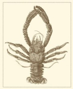 sepia lobster art print
