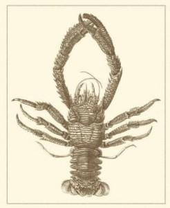 sepia lobster art print