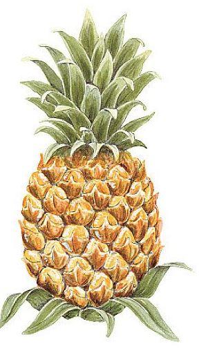 pineapple wallpaper cutout