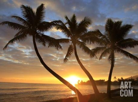 hawaii art on sale